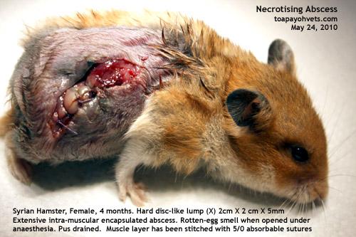 Exotic and Laboratory Animals  Merck Veterinary Manual